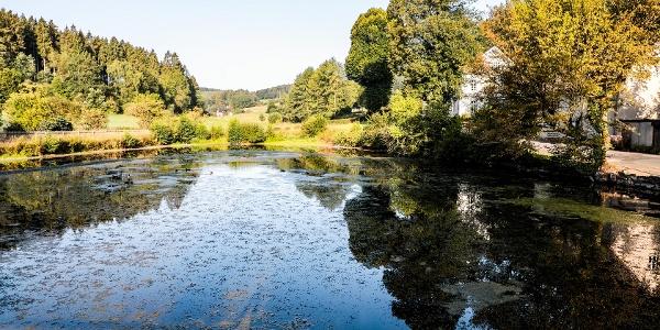 Fischteich am Ende bzw. Anfang des Schlechtenbachtals