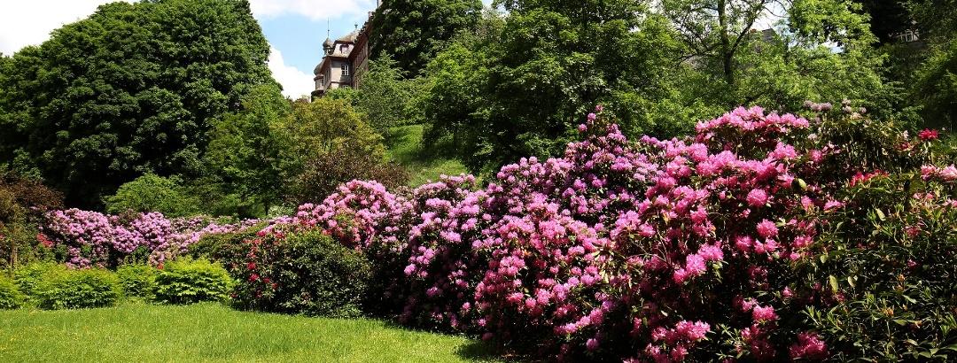 Schlosspark im Sommer, Image BLB