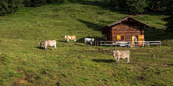 Alpe Röbi (c) Lucas Tiefenthaler / Vorarlberg Tourismus