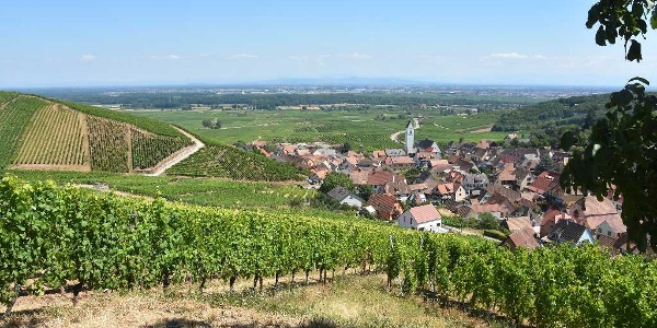 Katzenthal depuis le Château du Wineck