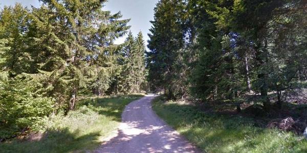Chemin forestier près du départ