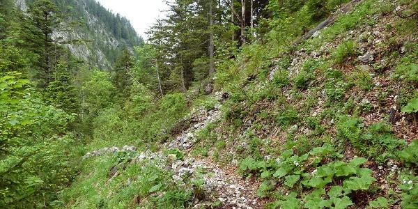 Wegstrecke am Steyrsteg © Nationalpark Kalkalpen