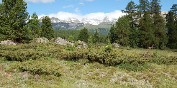 Ebene der Alp da Staz