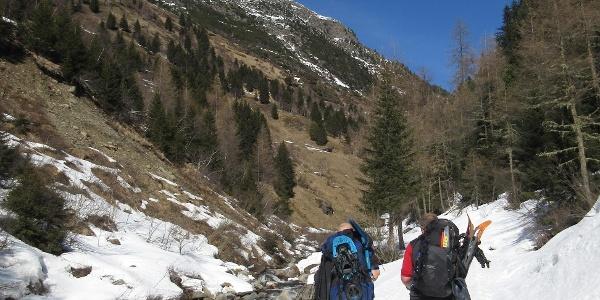 Entlang des Horlachbachs, wo die Südhänge bereits schneefrei sind.