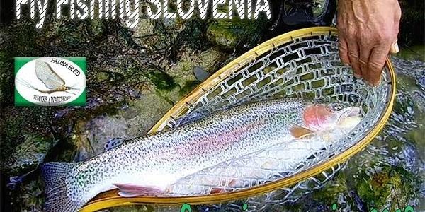 Fly Fishing Slovenia 2018 Sava and Sava Dolinka