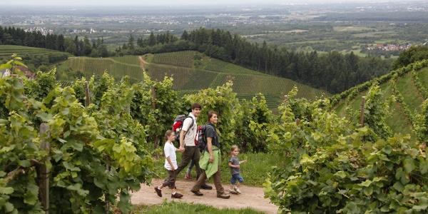 Auch Familien können die Weinwanderung machen