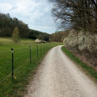Weg in Richtung Birnbaum