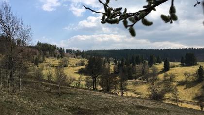 Bergwiesen bei Stützerbach