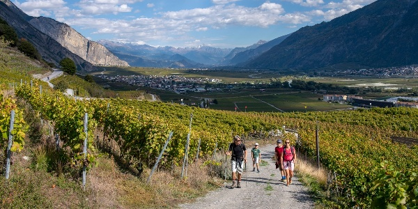 The path climbs gently from the floor of the valley through the Saillon vineyards