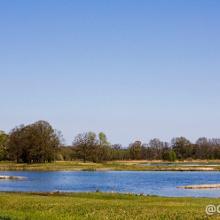 Steinhorster Becken 1