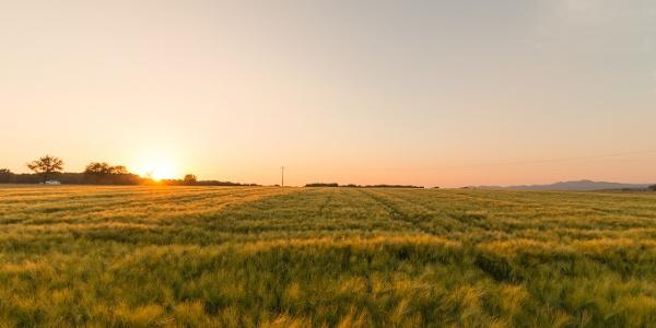 Felder oberhalb von Remagen