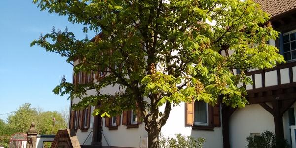 Steinweiler - Ruhebank Dorfplatz