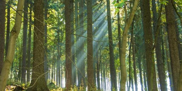 Wald im Erzgebirge