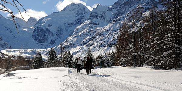 Winterwanderweg Morteratsch