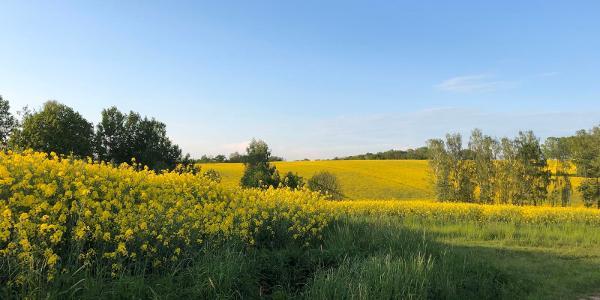 Blick über die Felder