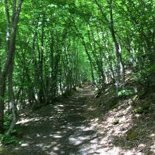 Waldpassage