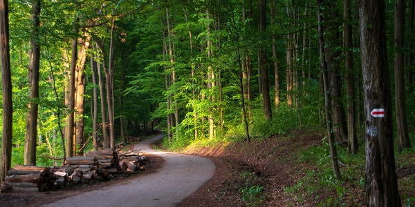 A Csókási út jellegzetes fennsíki bükkösben kanyarog
