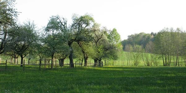 Grünkrauter Wiesen