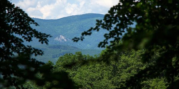 Korlátozott a kilátás a Vár-hegy tetejéről, szemben a Vörös-kő sziklás kúpja
