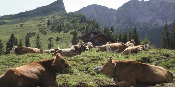 Stuibenhütte mit Kühen