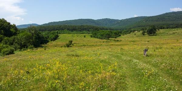 A Hideg-kút laposa hegyalji legelője