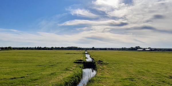 Weidse weilanden ten zuidwesten van Nederhorst den Berg