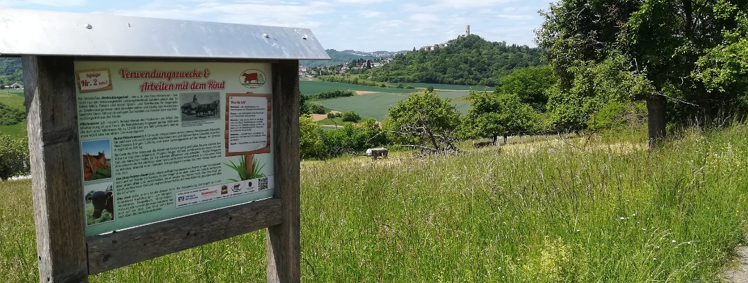Aussicht auf Burg Vetzberg an einer Infotafel