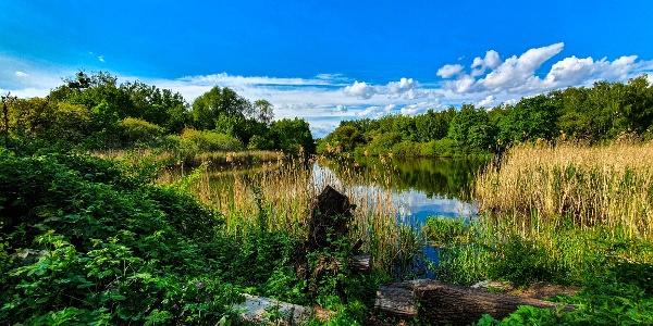 Der Buschgrabensee im Frühjahr