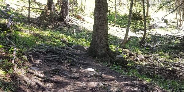 wurzliger Löser Trail