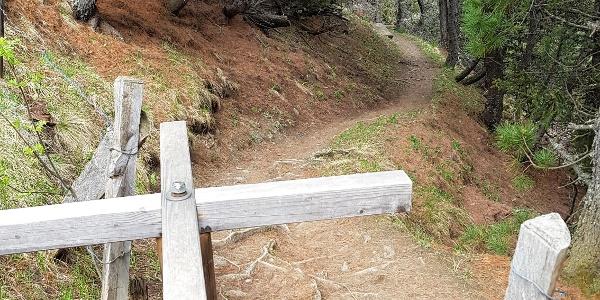 Kirchli Trail