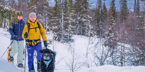 Lumikenkäilijöitä koiran kanssa retkellä Varkaankurun talvipolulla Ylläksellä