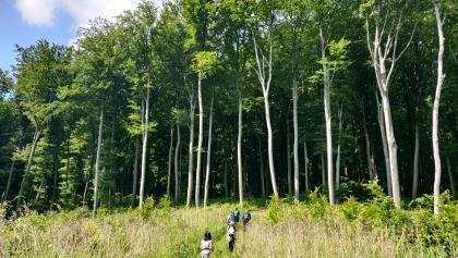 vissza az erdőbe