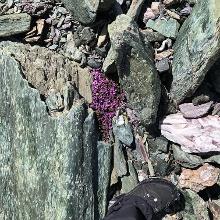 Alpenflora Val Faller