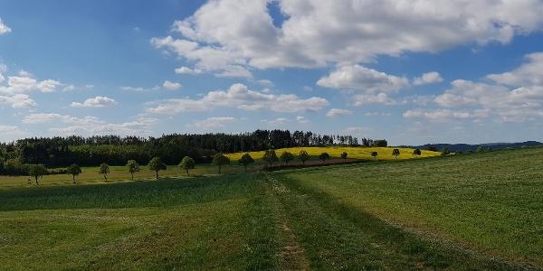 Anhöhe bei Lichtenfels-Sachsenberg