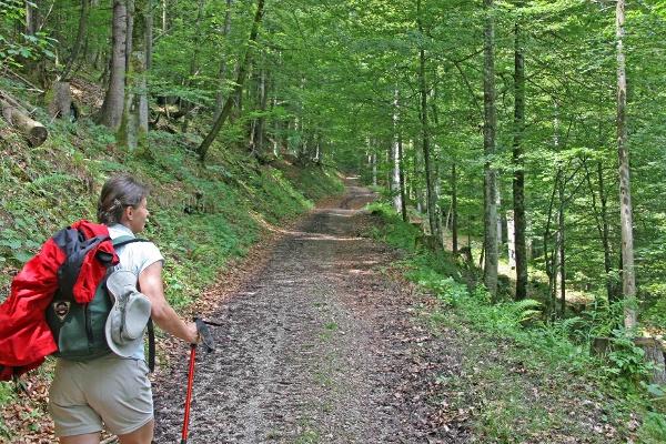 Abstieg Audofer Alm ins Gießenbachtal