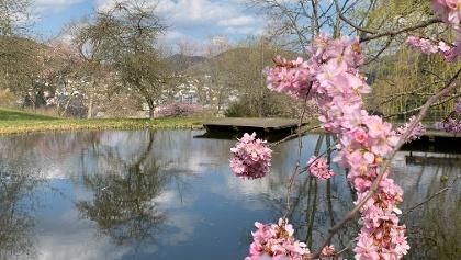 Frühling Kurpark Bad Laasphe