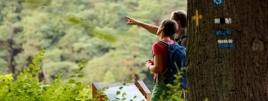 Wanderer im Wald und Wegemarkierung.
