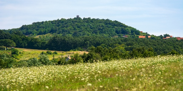 A Halom-hegy tetején a Kossuth-kilátóval