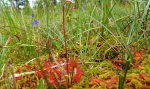 Naturschutzprojekt Bergwiese