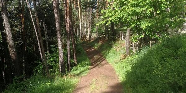 Sentiero verso il Locher.