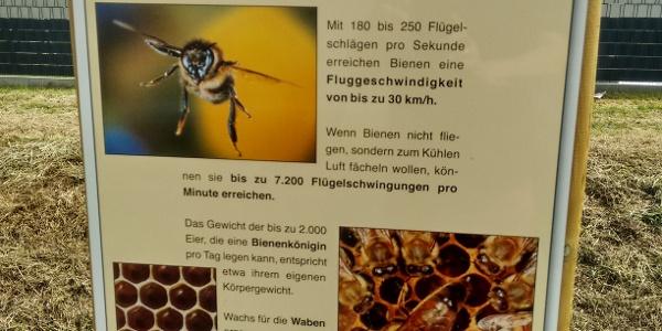 Informationstafel Bienenlehrpfad Freckenfeld