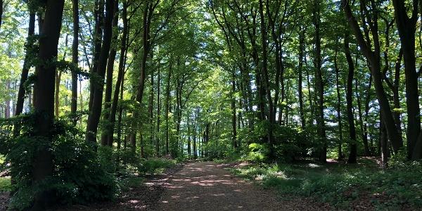 A1 - Wanderweg Holzhauser Berg