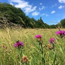 Es geht entlang herrlich blühender Wiesen - ein Paradies für Hummeln und Schmetterlinge.