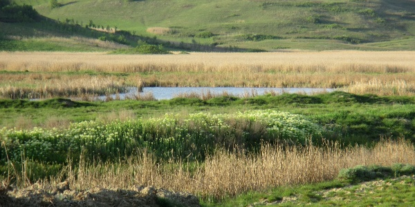 Rezervația naturală Stufărișurile de la Sic