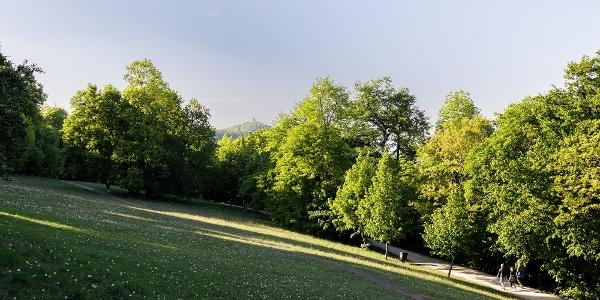 A Normafa, szemközt a János-hegy