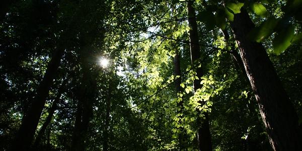Wald in Eisenstadt