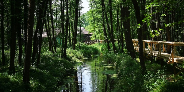 River School Velika Polana