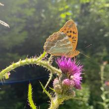 Schmetterling am Wegesrand