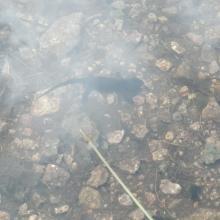 23 luglio 2020 lago delle buse - tritone alpino