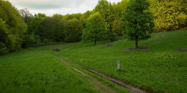 Kaszálórétek tarkítják utunkat végig a fennsíkon (tavasz a Faktor-réten)